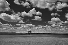 Farmlands Under Skies of Blue and Clouds of White (Black & White) (thor_mark ) Tags: alongroadside azimuth240 blackwhite blueskies bluesskieswithclouds capturenx2edited colorefexpro day5 farmhouse farmland farms grassland grassyarea grassyfield grassymeadow greatplains landscape lookingsw nature nikond800e northamericaplains northernusgreatplains oldfarmhouse outside partlycloudy portfolio project365 roadsidepulloff roadsidestop sd79 southdakotahighway79 sunny triptodakotas triptodakotasandwyoming westcentraldakotaplains newell southdakota unitedstates