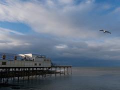 Lucy aloft (watcher330) Tags: aberystwyth pier sea seagull