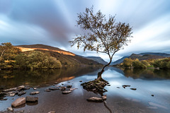 I know, That tree again!!!! (Nathan J Hammonds) Tags: wales uk llanberis tree lone llyn padarn long exposure nd filter 10stop water lake cloud sunset movement nikon d750 irex 15mm colour smooth
