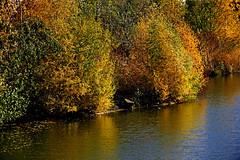 HerbstStillLeben (Michael Döring) Tags: gelsenkirchen bismarck zoomerlebniswelt zoo herbststillleben afs70200mm28g d800 michaeldöring