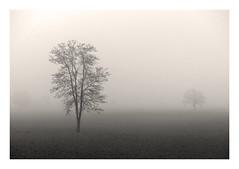 ... (claudiomantova1) Tags: ultimo foschia nebbia due atmosfera primavera autunno fog alberi