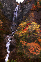 Fukube no Otaki IMG_4257 (armada_rider_jp) Tags: waterfalls waterfall fall falls water stream mountain leaves autumn 滝 ふくべの大滝 紅葉 秋 四季 japan forest mountainscape waterscape landscape nature