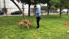 IMG_8552 (Doggy Puppins) Tags: educación canina adiestramiento canino perro dog