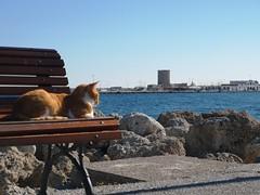 #greece #rhodes (kontos164) Tags: greece rhodes
