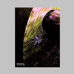 Aldrin_Iglesias_2019_1 (aldrin_iglesias) Tags: rioacimamg brazil aranha spider