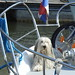 dogs on boats (8)
