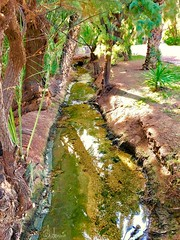 ARROYO (antonio-elx) Tags: naturaleza vegetación agua acequia arroyo