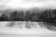 Old Winter (diesmali) Tags: winter snow field trees treeline shadows snowfall mist clouds canoneos7d tracks lines sigma70300mm blackandwhite östergötland bjärkasäby