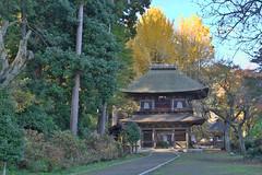 The Autumn Temple (seiji2012) Tags: あきる野 五日市 広徳寺 いちょう 銀杏 紅葉 黄葉 akiruno koutokujitemple itsukaichi ginkgo hdr