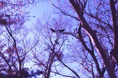 .entering the world of dreams and never coming out. (Camila Guerreiro) Tags: film expiredfilm fuji jeju island southkorea camilaguerreiro fujichrome 64t pentaxmesuper analog grain birds expired