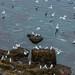Muitos pássaros na costa...