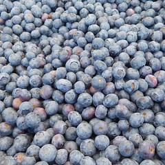 Blueberries (earthdog) Tags: 2017 s7000 nikoncoolpixs7000 nikon coolpix food edible farmersmarket mountainview berry blueberry