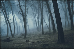 a las tierras sin nombre (jotaaguilera) Tags: nikon d810 sigma2470mmf28exdg solitude soledad spain bosque blur azul wood forest fog foggy mist mistery misteryous misterioso arbol tree dark darkness luz light niebla otoño autumn fall frío cold paisaje landscape mood moodiness atmosfera atmosphere nature whisper