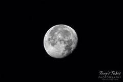 November 25, 2018 - The near-full moon. (Tony's Takes)