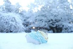 脚とおなか。 -じゅうとみっつめのお話し- (atacamaki) Tags: xt2 23mm f14 xf fujifilm jpeg撮って出し atacamaki walter ウォルター pig こぶた story snow winter 出島の家 庭 雪 脚の長さの問題だ かすみがうら
