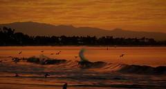 Surf,  Long Beach--explore (beachpeepsrus) Tags: beach birds beachfront bay boats california clouds shore sky sunrise sihlouette water wave westcoast dawn color c