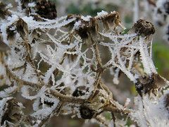 Decorated by Nature (Shelley Penner) Tags: frost webbing spiderwebs naturesjewelry