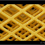 In the net thumbnail