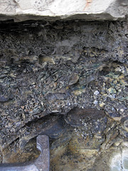Maury Shale (Lower Mississippian; Burkesville West Rt. 90 roadcut, Kentucky, USA) 8 (James St. John) Tags: phosphatic nodule nodules phosphate phosphorite maury shale mississippian cumberland county kentucky condensed interval burkesville