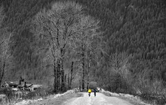 In the big picture (Christie : Colour & Light Collection) Tags: bikers bicycles bikes mountain yellow thecoloryellow trees selectivecolouring selectivecolor two winter canadianwinter rural pittlakedike dike rustic blackandwhite smallandbig pathway lead leadwork inthebigpicture exercise