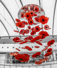 Red Poppies. (CWhatPhotos) Tags: cwhatphotos red poppy poppies display artwork sculpture digital camera photographs photograph pics pictures pic picture image images foto fotos photography artistic that have which with contain olympus epl9 pen themetrocentre intu shopping metro shops shop centre mzuiko zuiko prime lens 8mm f18 fisheye fish eye wide angle view color colour select partial