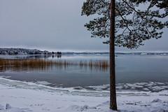 Winter (Joni Mansikka) Tags: nature winter outdoor sea bay reeds trees snow ice calm landscape harvaluoto piikkiö suomi finland