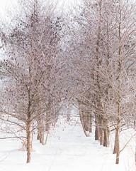 IMG_5048 (angrykarl) Tags: canonm5 canoneosm5 winter helios44 helios442 vintagelens manualfocus