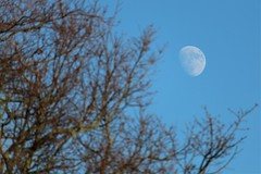 Good Aftermoon, Mr.Waxing Gibbous Moon! (@FunkyAppleTree) Tags: moon lunar craters waxing gibbous crater astro astrophysics astrophotography astronomy sky blue daytime afternoon trees branches twigs abstract january 2019 illuminated