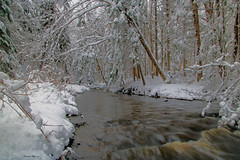Coulée froide / Cold stream (Donald Plourde) Tags: ruisseau ogilvie brook parc irishtown neige snow arbres trees