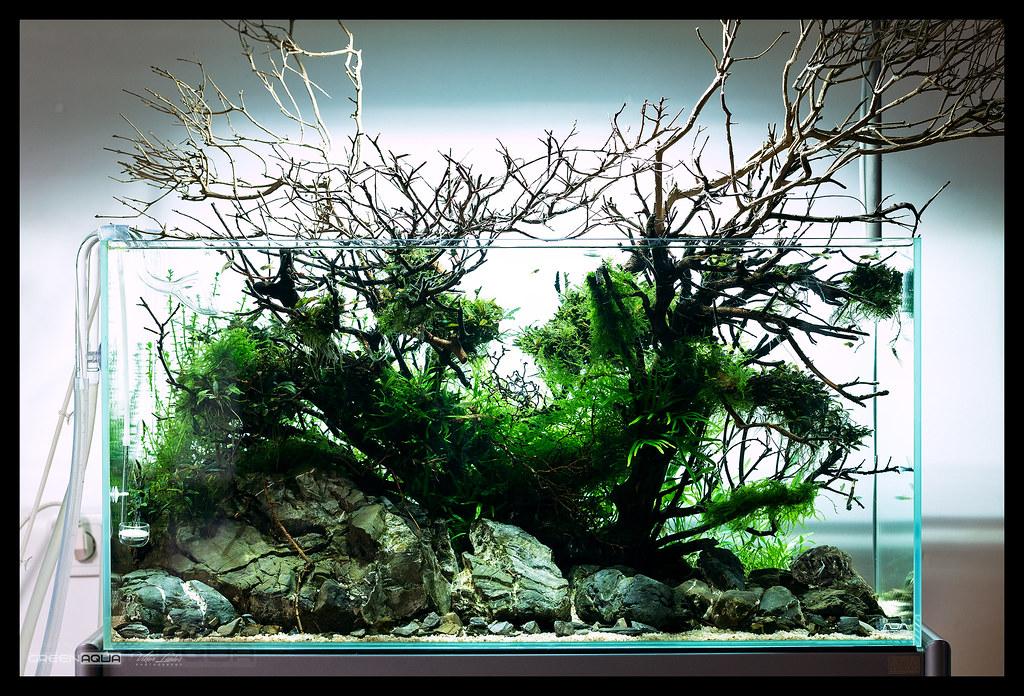 the world s best photos of plantedaquarium flickr hive mind