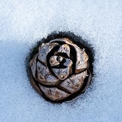 Pinecone in the Snow (alitay) Tags: grandcanyonnationalpark pinecone snow lightanddark clean