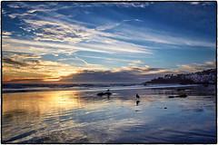 Broad Beach, Malibu. (drpeterrath) Tags: sunset sunrise ocean water bird blue outdoor seascape landscape malibu california calilife winter reflection