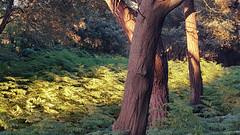 Noja (alvaro31416) Tags: noja bosque cantabria