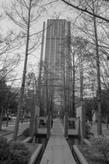 Higashi-yuenchi Park (Hideki-I) Tags: park kobe japan nikon d850 2470 blackandwhite bw 白黒 黑白