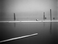 - At the docks XV(b)- (Tom Findahl) Tags: zeiss ikon nettar 515 anastigmat f63 doks water