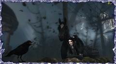 Aqualung Series ~ Mary Has The Ear Of The Locals (0rco) Tags: secondlife gothic crow horse crosseyedmary jethrotull blackcomedy bird sl storm