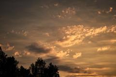Aquarelle (iamunclefester) Tags: münchen munich autumn clouds cloudscape cloud cloudy orange golden goldenhour tree trees silhouette aquarelle watercolor watercolour light lights lightray rayoflight ray