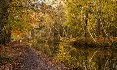 Canal landscape (markhortonphotography) Tags: autumn surrey waterway reflection fern bracken nature water surreyheath canal autumncolour basingstokecanal fall leaves silverbirch