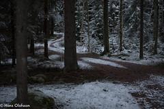 Skogsväg (Hans Olofsson) Tags: foto natur skammelstorp skogen åtelkamera skogsväg snö forest vinterskog träd skog winter vinter småland sweden road