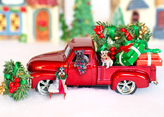Merry Christmas (Cheryl3001) Tags: schnauzer miniature dog pup scene red truck old christmas card photoshop canon 5d mark iii 50mm f14