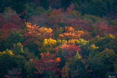Sun kissed fall trees (II) (DJM Photos) Tags: acadia maine newengland fall foliage leaf leaves tree trees woods forest color colors colorful yellow red orange gold light morning outdoors outside landscape sunrise