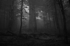 Deep in the forest (andriy.8) Tags: landscape mountains tree mist carpathians ukraine