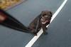 On the Line (jurgita_zuk) Tags: dog labrador retriver line pathway park outdoor outdoors sweden sverige gothenburg göteborg