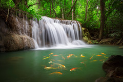 The Huai Mae Khamin Waterfall (Patrick Foto ;)) Tags: asian background beautiful beauty buddhist bushes calm carp chinese cliff cool falls fish foliage forest fortune fresh garden good green japanese koi lake landscape luck meditation mist nature orange park peace peaceful pond red relaxation relaxing rocks serene splash stone stream temple thailand tradition tree tropical water waterfall white zen sisawat kanchanaburi th