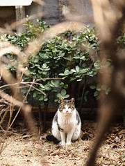Stray Cat in Seoul (klawass6085) Tags: cat straycat streetcat olympus omd em1 mzuiko75mmf18 mftanimals m43