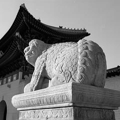 [ 獬豸 ] (Michael Sameth) Tags: 獬豸 해태 광화문 서울 seoul gwanghwamun 석조조각상 fuji gf670 mediumformat kodak tmy400