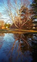 "Cincinnati - Spring Grove Cemetery & Arboretum ""Geyser Lake"" (David Paul Ohmer) Tags: cincinnati ohio spring grove cemetery arboretum geyser lake tree reflection"