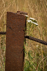 Rail post (johnstewartnz) Tags: canon canonapsc apsc eos 100canon eosm efm1855mmf3556isstm 1855mm 1855 7thfebruary day038 post wire yarrow westmelton thompsonsroad evil tlp