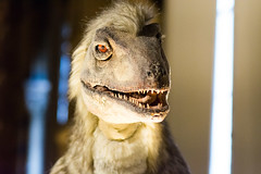 Deinocheirus - Natural History Museum London (nickstone333) Tags: naturalhistorymuseum london museum deinocheirus dinosaur atxm100afprod tokinaaf100mmf28macro nikon nikond7100 d7100