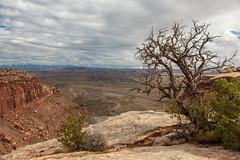 A Nice View (W9JIM) Tags: w9jim 5d4 24105l 7milerim moab utah unitedstates us canoneos5dmarkiv ef24105mmf4lisusm deadtree